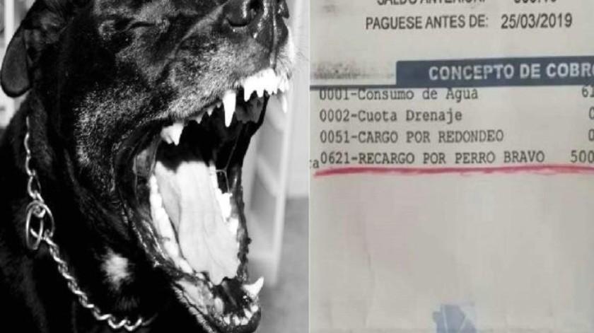 Saca mujer a su perro para evitar lectura de consumo de agua en Chihuahua; así la castigaron