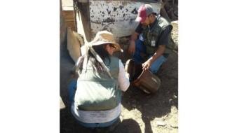 Implementan acciones para evitar el mosco transmisor del dengue