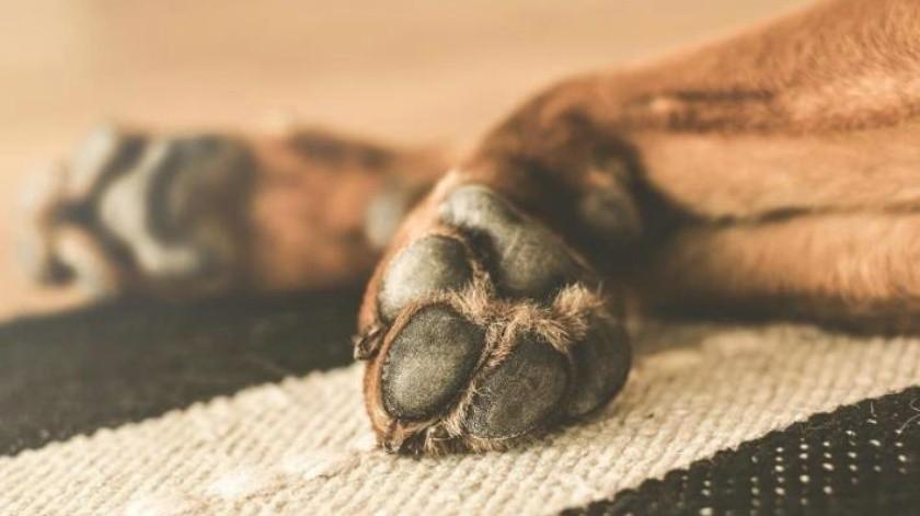 Perrito es quemado vivo por su propio dueño en Chihuahua