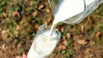 Profeco dice que Nutrileche no es leche