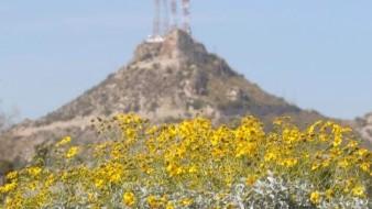 Planean transformar Cerro de la Campana; proyectan que haya  cafés y restaurantes móviles