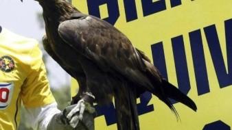 VIDEO: ¡Pobre mascota!, se lesiona Celeste, águila de shows del América en el Azteca
