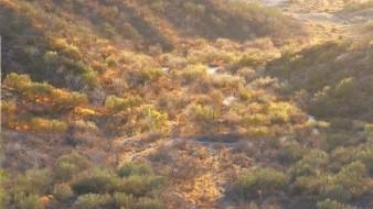 Invitan a registrar la flora y fauna del Cerro Bachoco
