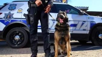 Armados hasta los dientes, los K9 de la policía de Mexicali