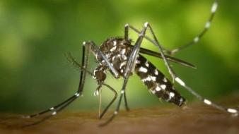 Anuncian el nuevo repelente de insectos que proviene de bacterias