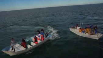 VIDEO: Pescadores atacan barco ambientalista que protege a la vaquita marina en el Golfo de California