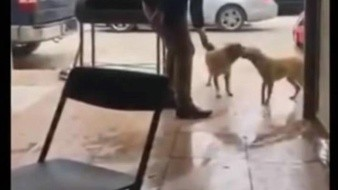 VIDEO: Hombre apuñala a perro callejero en Piedras Negras; Fiscalía de Coahuila investiga el caso