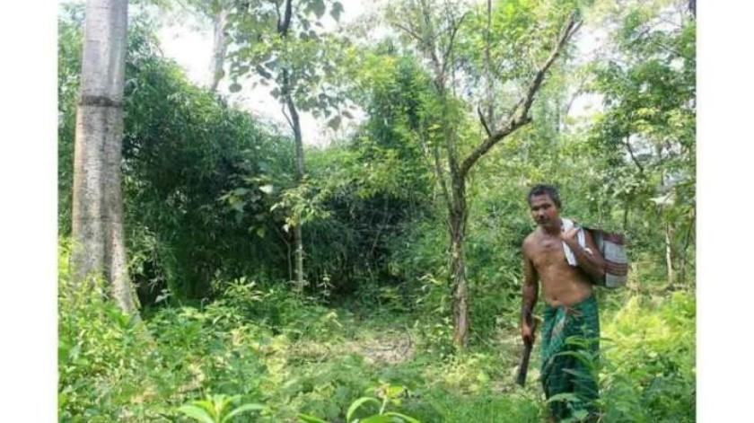Un hombre de La India planta un árbol al día por 39 años