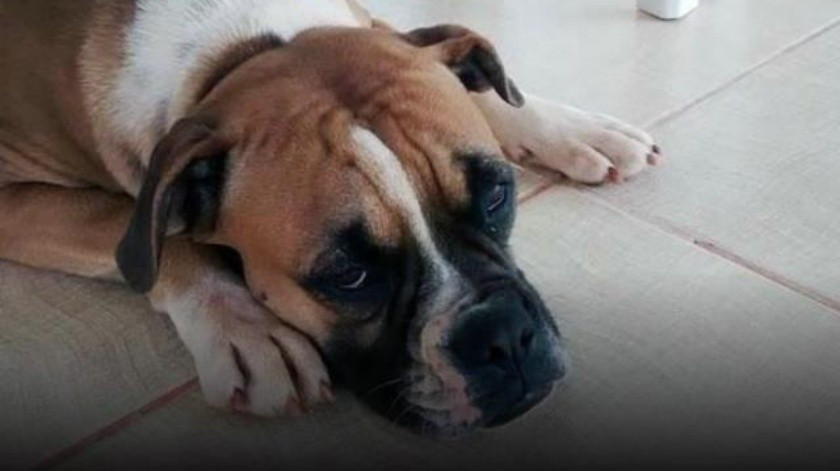¿Qué hacer si tu mascota presenta síntomas de depresión?