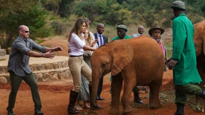 VIDEO: Embisten elefantes a Melania Trump en su visita a Kenia