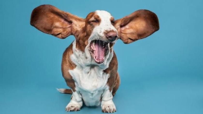 Por qué no debes avergonzarte por hablar a tu perro como un bebé