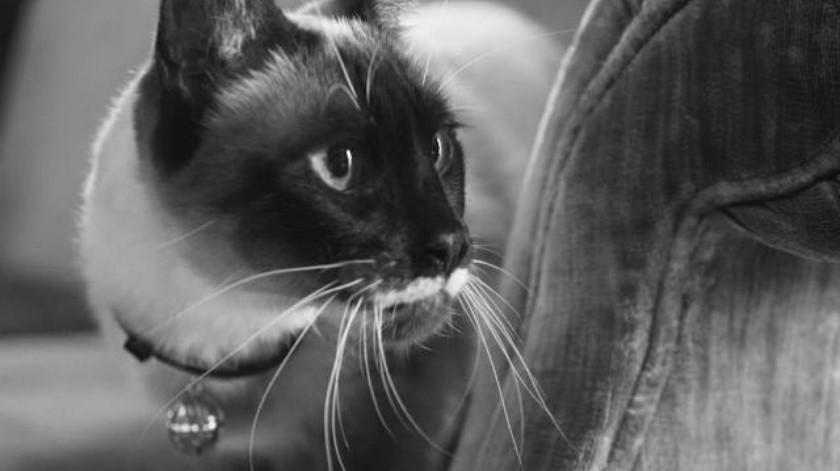 Curiosidades de los gatos que seguramente no conocía