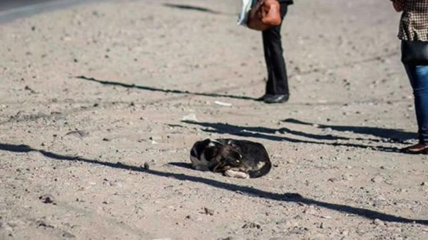 Querétaro :Van seis casos de leptospirosis en mascotas