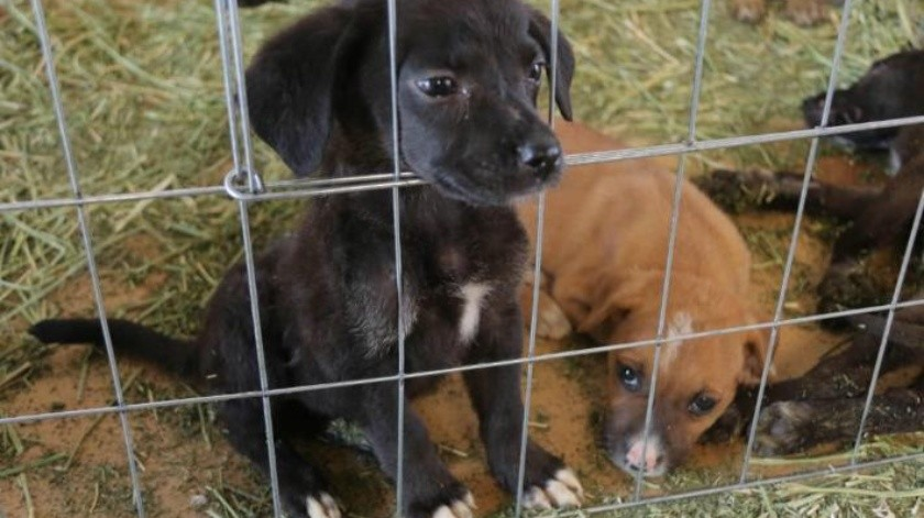 Urgen atención a casos de maltrato animal