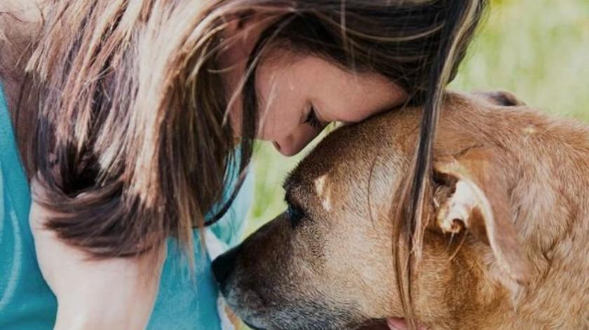 Estudio concluyó que los perros detectan la tristeza