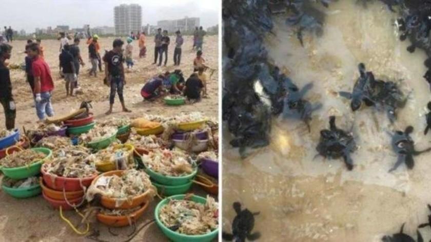Regresan tortugas marinas a una playa de la India por primera vez en 20 años