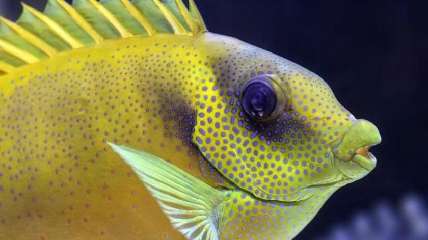 Tips para evitar que tu pez se estrese