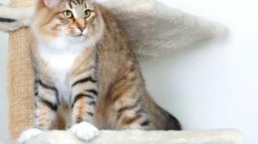 Accesorios imprescindibles para tu gato en este otoño