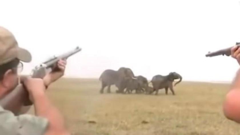 VIDEO: Así respondió una manada de elefantes cuando cazadores le dispararon a uno de ellos