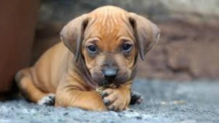 Esta iniciativa quiere establecer el 3 de noviembre como Día de Muertos de las mascotas