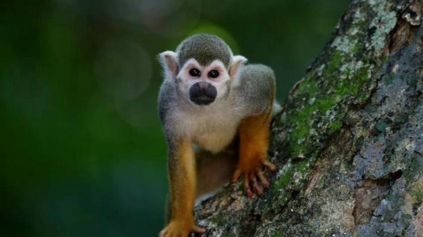 Monos matan a ladrillazos a hombre mayor en la India