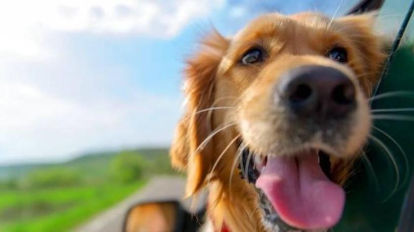 Buscan legislación para castigar maltrato contra las mascotas