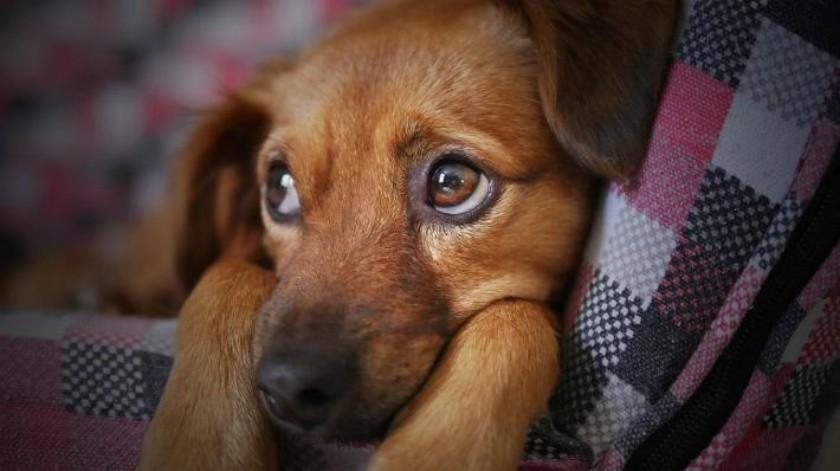 Buscan darle un hogar a perros y gatos en Cajeme