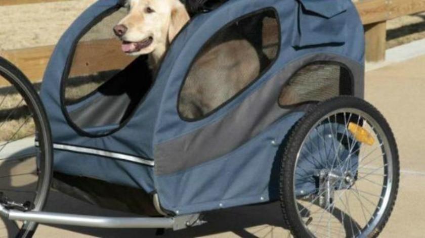 ¡Ojo! Sacar a pasear a tu perro en carriola lo desequilibra