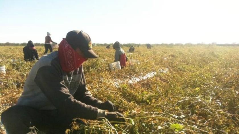 Conagua aprueba volumen de agua para ciclo agrícola