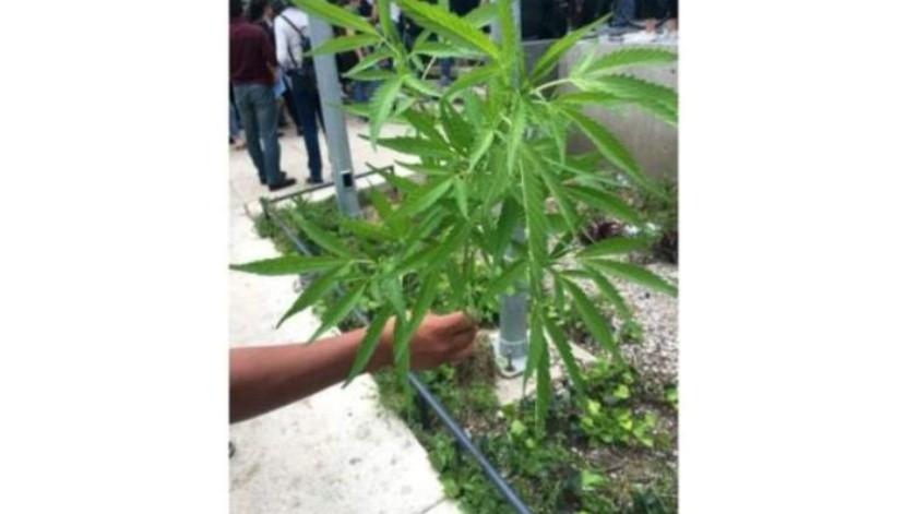 """""""No manches, carnal, son nuestras las plantas"""": Hallan plantas de mariguana en el Monumento a la Madre"""