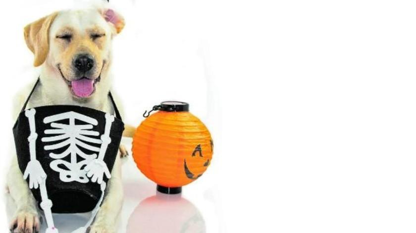 Mascotas: Haz el disfraz de Halloween a tu perro
