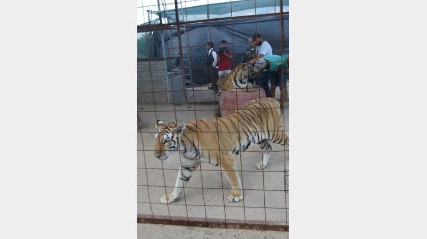 """""""Ya está muy bien"""", asegura papá de niña atacada por tigre"""
