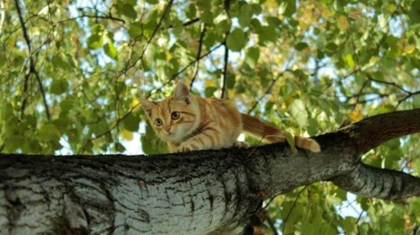 ¿Los gatos sentir miedo a las alturas?