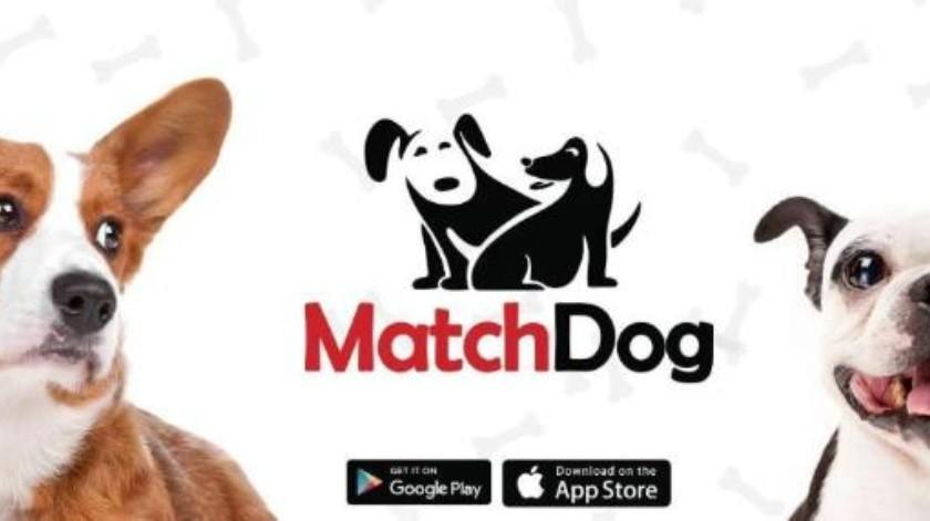 Crean aplicación por amor a las mascotas