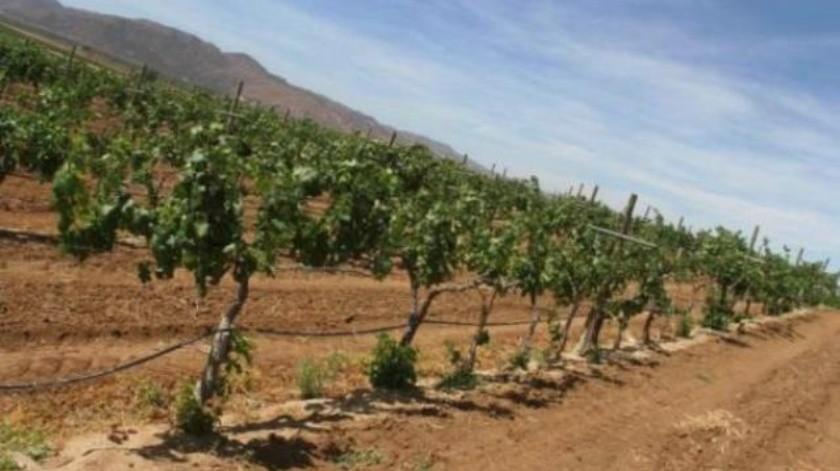 Vitivinicultores están abiertos al proyecto de agua tratada