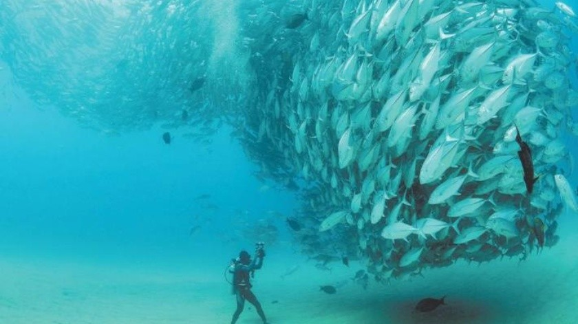 Mar de Cortés, el laboratorio del mundo