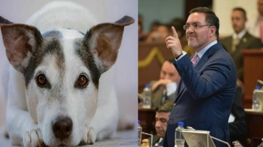 CDMX: PAN propone castigar con cárcel a quien mutile animales con fines estéticos
