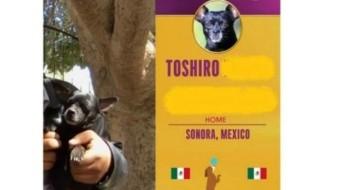 Chihuahua gana 100 mil dólares en concurso de mascotas; asaltan a sus dueños