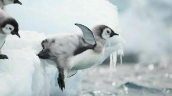 Mueren crías de pingüino por derretimiento de la Antártida