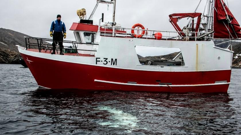 De momento no se sabe si alguna instalación de delfines o ballenas en St. Petersburg, Florida, tiene alguna beluga desaparecida.(AP)