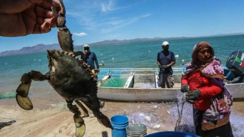 Inicia veda de jaiba, tiburón y rayas: Pesca