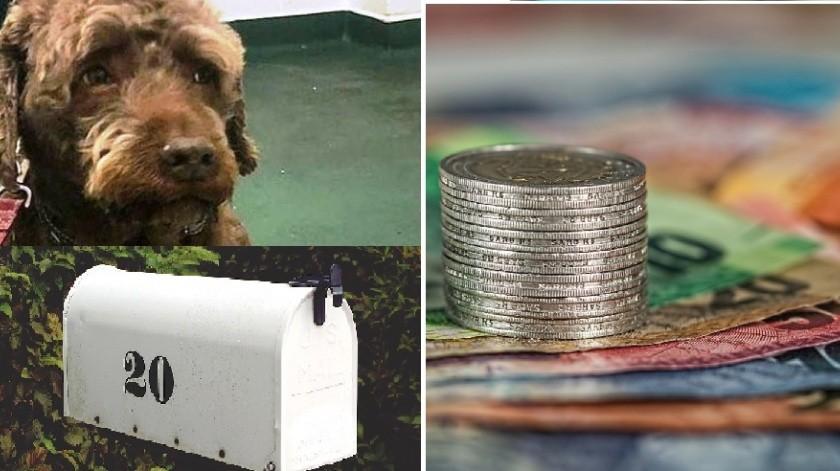 Perrito traga 4 mil pesos que debían a sus dueños(Pixabay)