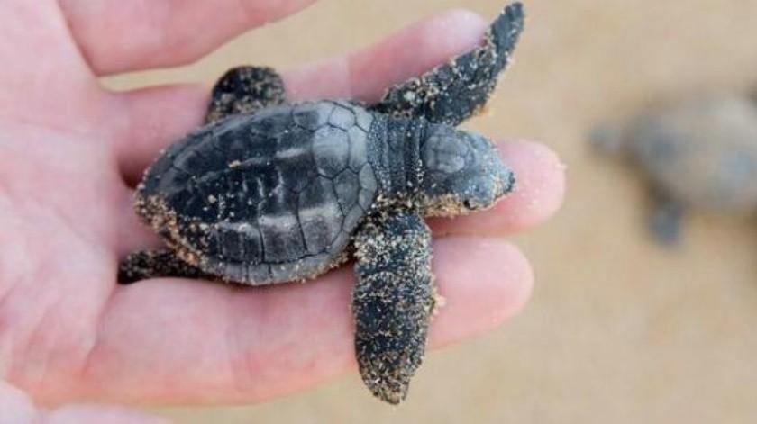 ¿Cómo respiran las tortugas?