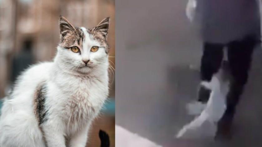 En tono sarcástico, apuntó que lo que más le duele, es que en este video, supuestamente, recibe más sillazos que rasguños del gato.