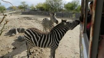 El CES mantiene programa de intercambio con otros zoológicos.