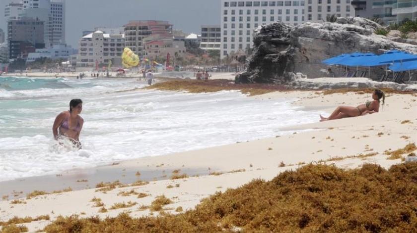 Los turistas que buscan sol y playa en balnearios mexicanos como Cancún, Playa del Carmen y Tulum se topado con montones de maloliente sargazo, un alga marina que se acumula en las playas y tiñe el color turquesa de sus aguas de marrón. Y los expertos advierten que esta podría ser la nueva realidad de la zona.(EFE)