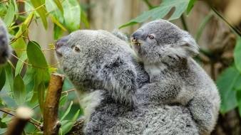 De acuerdo con National Geographic, la caza de este mamífero fue muy popular entre 1920 y 1930, lo que hizo que redujera su población considerablemente.