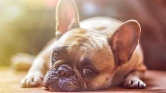 Piden proteger mascotas por contingencia ambiental