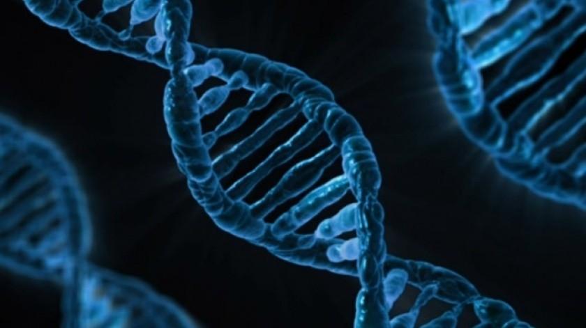 Casi todos los organismos vivos utilizan 64 codones, muchos de los cuales desempeñan la misma función.(Cortesía)