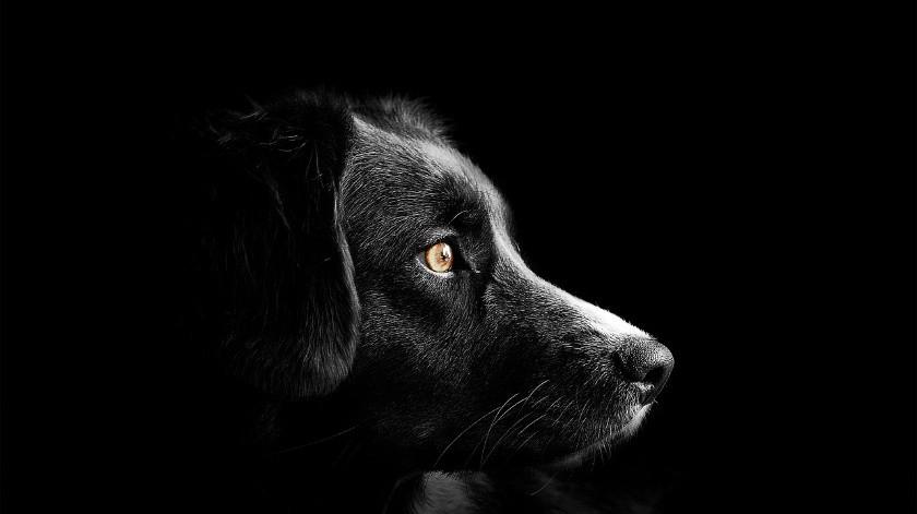 ¡Héroe! Salva perrito a bebé enterrado vivo por su madre(Pixabay)